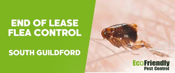 End of Lease Flea Control South Guildford