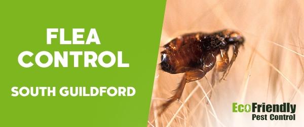 Fleas Control South Guildford