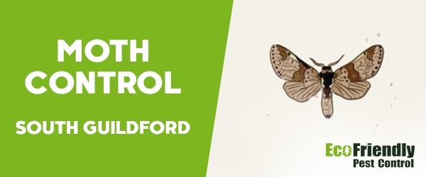 Moth Control South Guildford