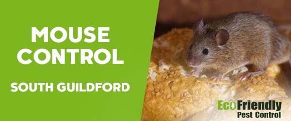 Mouse Control South Guildford