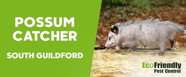 Possum Catcher South Guildford