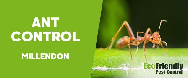 Ant Control Millendon