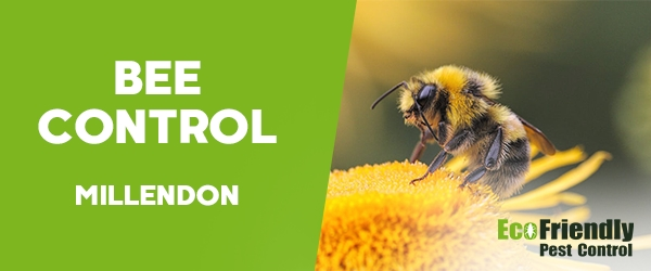 Bee Control Millendon
