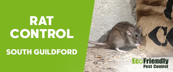 Rat Pest Control South Guildford