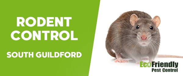 Rodent Treatment South Guildford