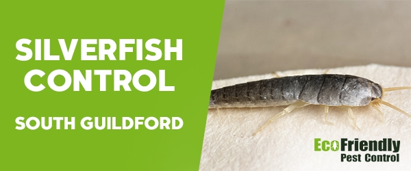 Silverfish Control South Guildford