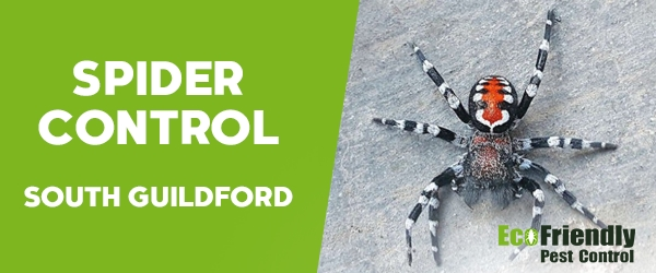 Spider Control South Guildford
