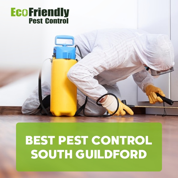 Best Pest Control South Guildford