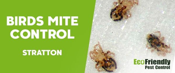 Bird Mite Control  Stratton