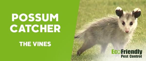Possum Catcher The Vines