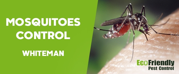 Mosquitoes Control  Whiteman