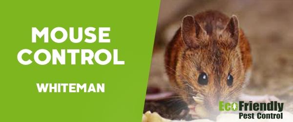 Mouse Control  Whiteman