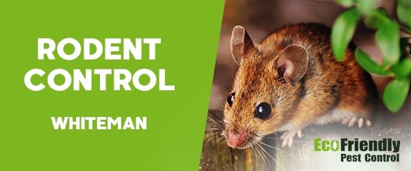 Rodent Treatment  Whiteman