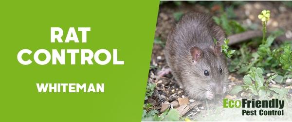 Rat Pest Control  Whiteman