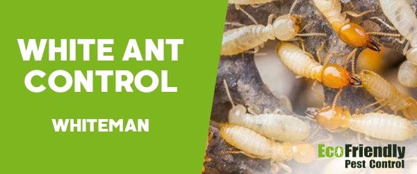 White Ant Control  Whiteman