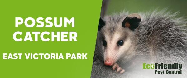 Possum Catcher  East Victoria Park