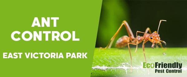 Ant Control  East Victoria Park