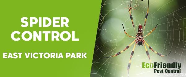 Spider Control  East Victoria Park