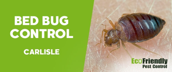 Bed Bug Control Carlisle