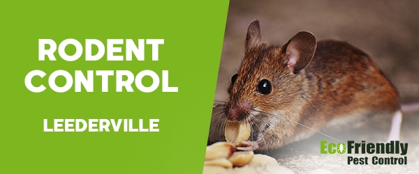 Rodent Treatment  Leederville