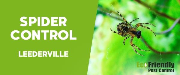 Spider Control  Leederville