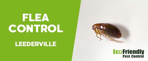 Fleas Control  Leederville