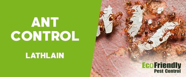 Ant Control Lathlain