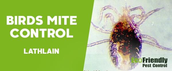 Bird Mite Control Lathlain