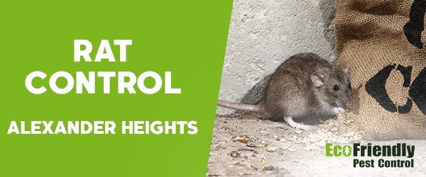Rat Pest Control Alexander Heights