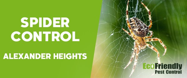 Spider Control Alexander Heights