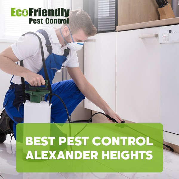 Best Pest Control Alexander Heights