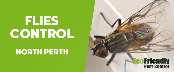 Flies Control North Perth