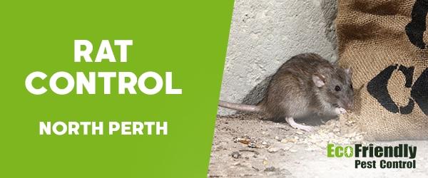 Rat Pest Control North Perth