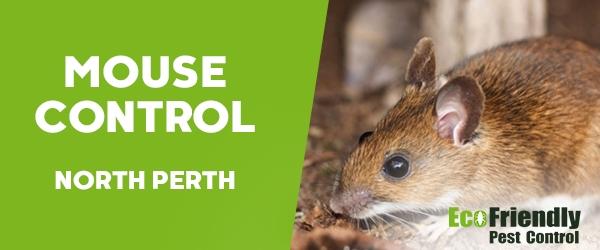 Mouse Control North Perth