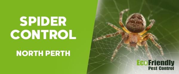 Spider Control North Perth