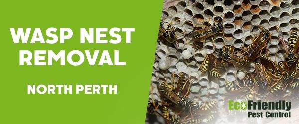 Wasp Nest Remvoal North Perth