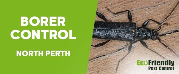Borer Control North Perth