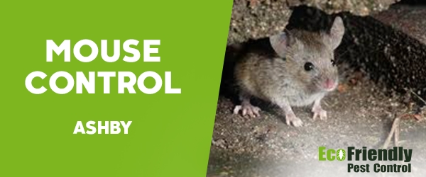 Mouse Control Ashby
