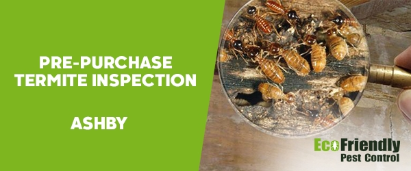 Pre-purchase Termite Inspection Ashby
