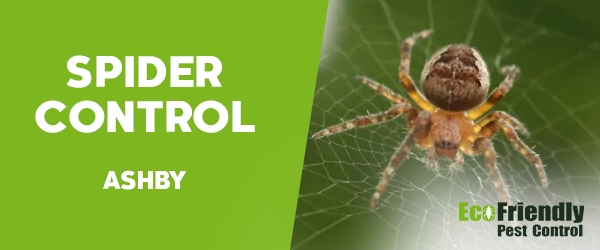 Spider Control Ashby