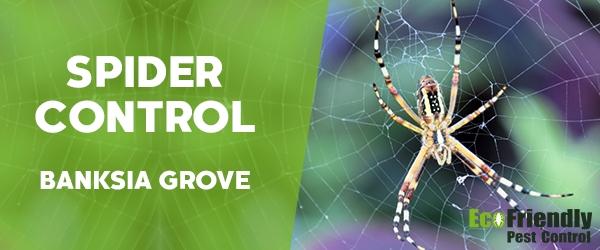 Spider Control  Banksia Grove