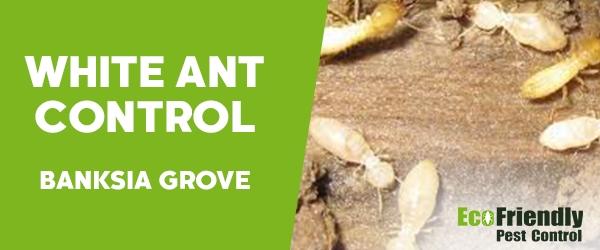 White Ant Control  Banksia Grove