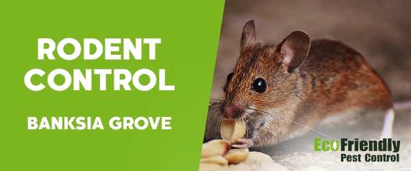 Rodent Treatment  Banksia Grove