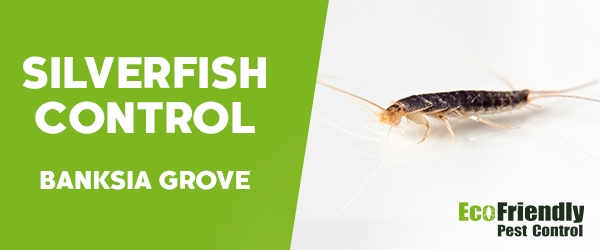 Silverfish Control  Banksia Grove
