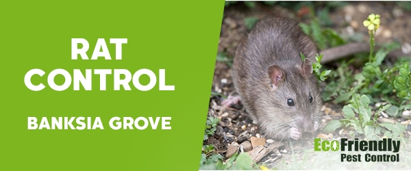 Rat Pest Control  Banksia Grove