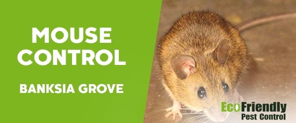 Mouse Control  Banksia Grove