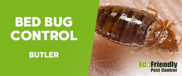 Bed Bug Control Butler