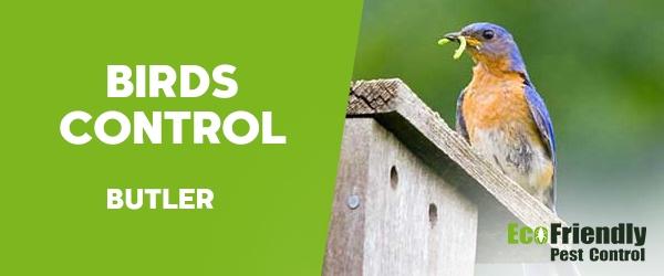 Birds Control Butler