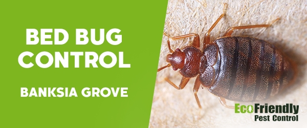 Bed Bug Control  Banksia Grove