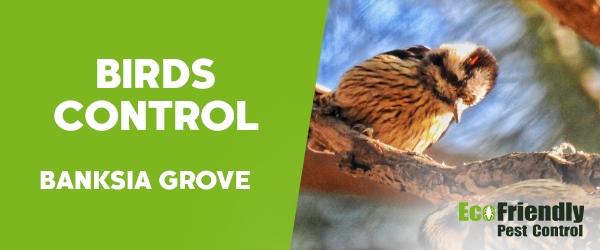 Birds Control  Banksia Grove